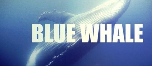Blue Whale in Italia: diversi casi a Fiumicino