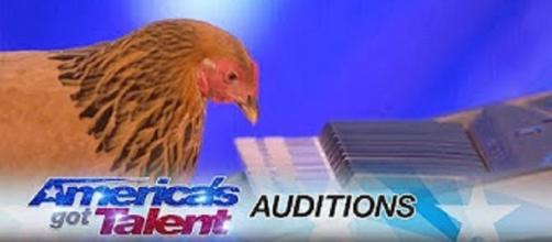 """Jokgu the Japanese chicken plays her heart out on """"America's Got Talent,"""" premiering May 30--personal edited screenshot image"""