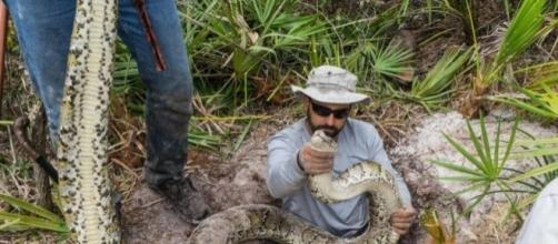 South Florida python hunters killing Everglades snakes | Miami.com - miami.com