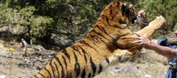 Tigre devora mulher viva em zoológico - Imagem/Google