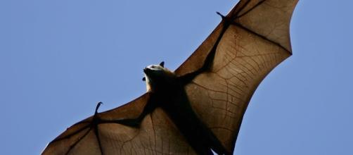 Morcegos 'vampiros' estão atacando pessoas no Brasil, na região de Salvador-BA ( Foto ilustração Google)