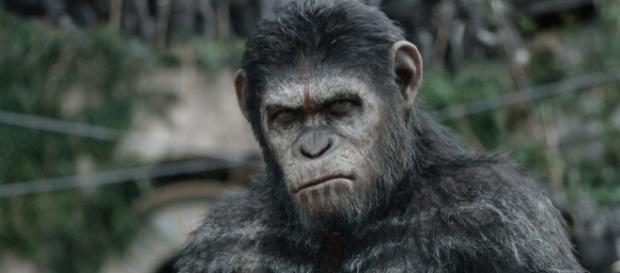 Watch Dire New 'War for the Planet of the Apes' Trailer - Rolling ... - rollingstone.com