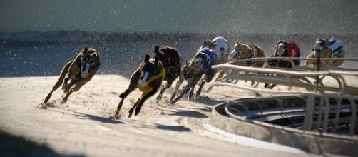 Greyhound Racing | ASPCA - aspca.org