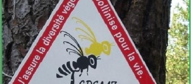 Disparition effarante de colonies d'abeilles