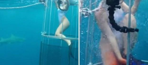Molly Cavalli foi mordida por um tubarão