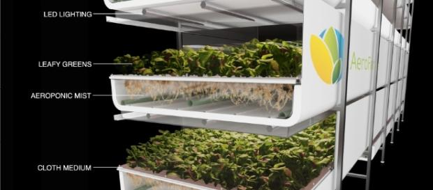 Blog - agupieware.com vertical farm