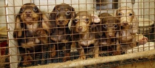 NJ Assembly Passes Bill Banning Cruel and Inhumane Puppy Mills ... - patch.com