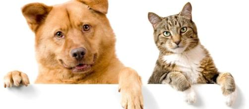 Which are better: dogs or cats? - The Boston Globe - bostonglobe.com
