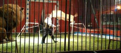 Durante espetáculo leão ataca domador
