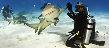 Tubarão faz pose surpreendente