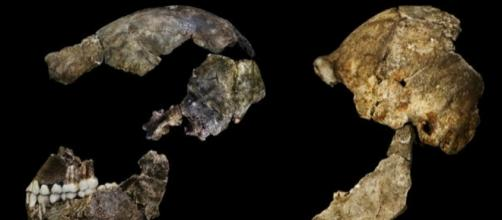 Remains of ancient human species found in S Africa cave - Al ... - aljazeera.com