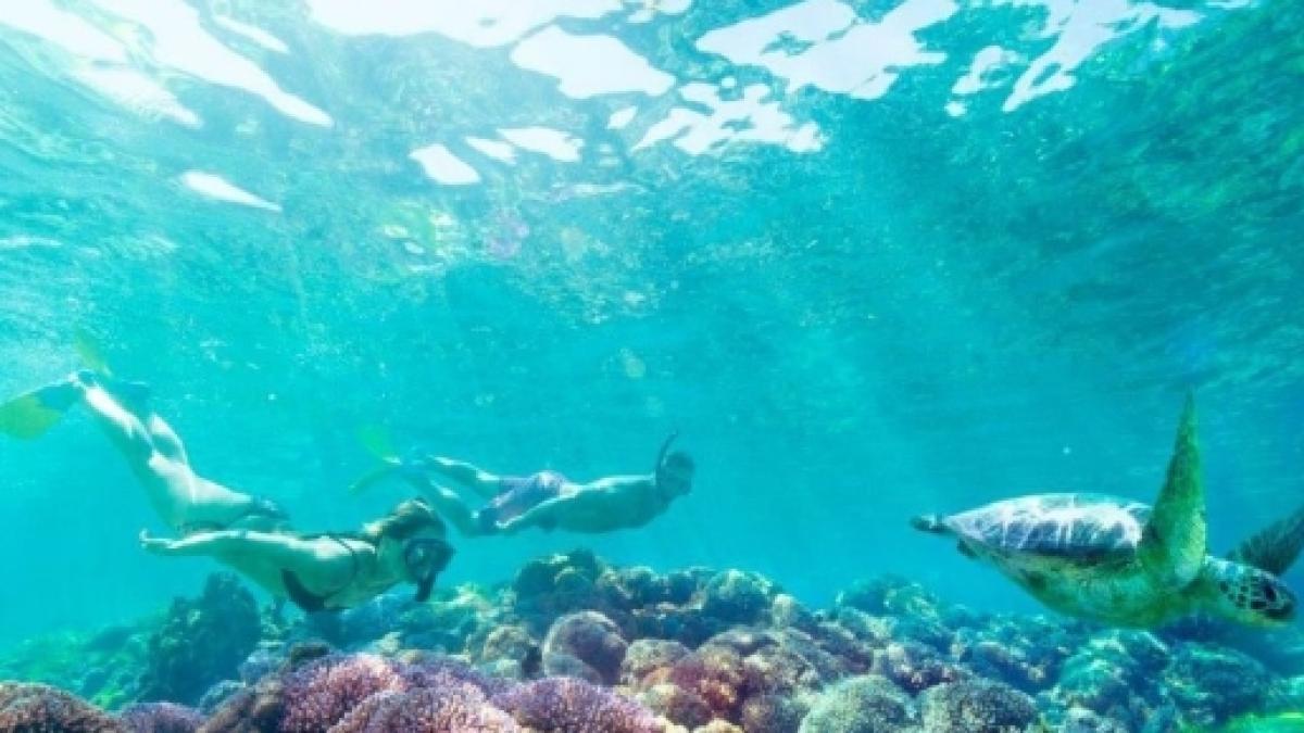 siti di incontri di pesce Australia