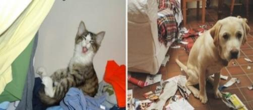 Na tentativa de aliviar o estresse cães e gatos fazem uma tremenda bagunça (Foto: Reprodução)