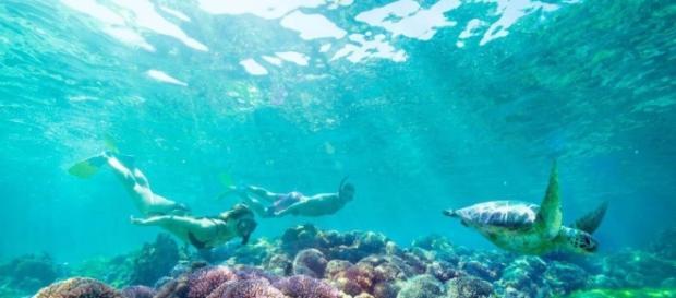 Snorkeling Lord Howe Island, Australia
