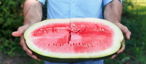 Saving The Sweetest Watermelon The South Has Ever Known : The Salt ... - npr.org