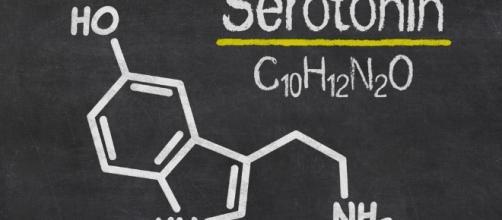 La serotonina | - serenamissori.it