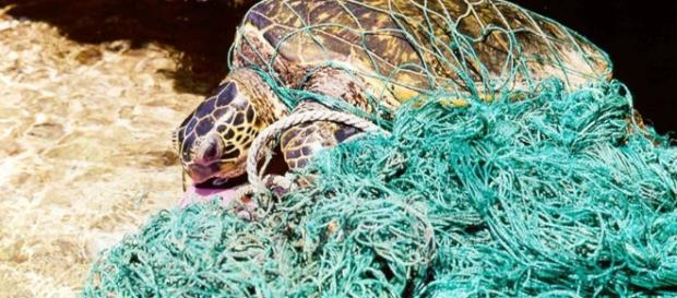 Derelict fishing nets endanger marine species/Photo via NOOA.gov