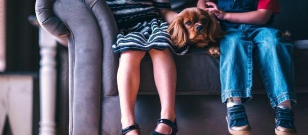 Dogs and kids, a good fit? Photo via Pixabay by Pexels / CC0