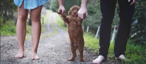 Ensaio de um casal com seu adorável cão Humphrey