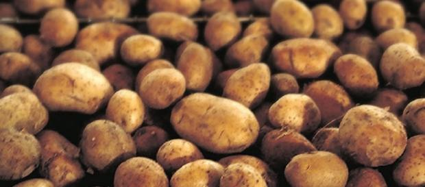 Potatoes to be grown on the moon (United States Department of Agriculture)