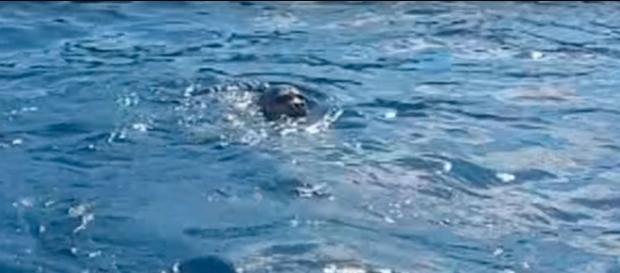 Un fotogramma del video dell'eccezionale avvistamento a Tricase (Lecce)
