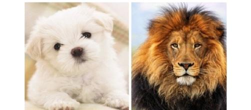 Qual animal representa melhor o seu signo?