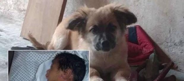 Cachorro resgata bebê (fonte: http://www.portaldoanimal.org/cao-resgata-bebe-recem-nascido-abandonado-em-um-saco-de-plastico/)