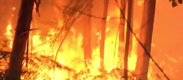 Incendio en Portugal deja al menos 62 muertos