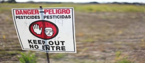 Los pesticidas contienen disruptores endocrinos que afectan a toda la cadena alimenticia