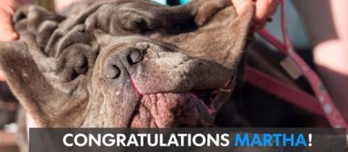 Meet Martha the Mastiff (Image via USA TODAY / YouTube)