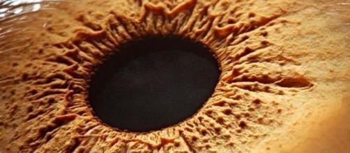 Os olhos, que podem ser tão belos, vistos de perto (de muito perto, aliás), podem ser estranhos.