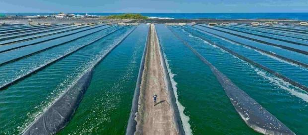 Las algas como combustible del futuro, resultado de una ... - agroalimentando.com