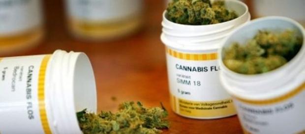 Desde hoy es legal el uso medicinal y científico de la marihuana ... - regeneracion.mx