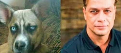 Cachorrinhos que se parecem com gente famosa (Foto: Reprodução/Twitter)
