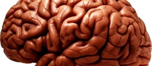 Cerebros caníbales provocados por la fata de sueño