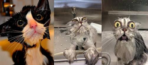 Porque os gatos não gostam de água