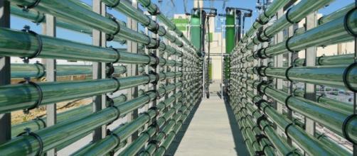 Las microalgas tienen mayor capacidad de captura de dióxido que las plantas y se investiga su cultivo en fotobiorreactores. biotechmagazine.es