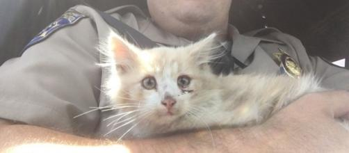 Photo courtesy CHP - Marin - do you know this cat?