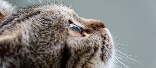 Los animales no humanos tienen ojos para ver, oídos para escuchar, nariz para respirar, boca para comer y cerebro para pensar