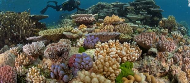 How much the Great Barrier Reef is worth, and what there is to ... - tips4all.eu