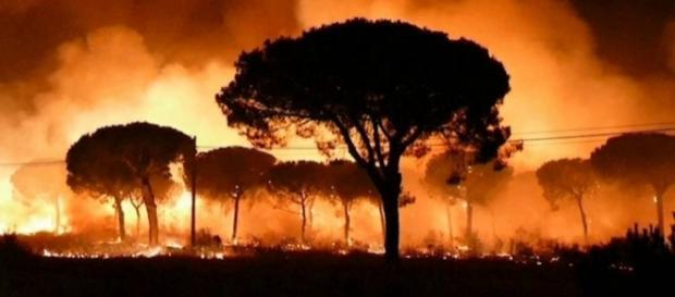 Incendio en Parque Natural Doñana hace que más de 2000 personas sean desalojadas