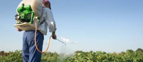 Biofertilizantes elaborados con bacterias, hongos o cianobacterias mejoran cultivos.