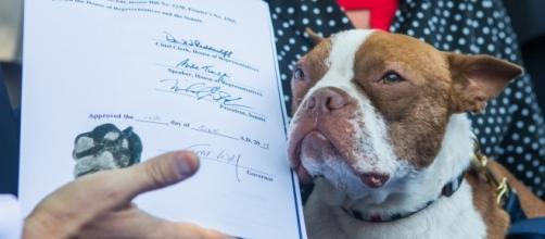 Libre adds Paw Print to Libre's Law to fight animal cruelty - Photo courtesy of Governor Tom Wolf via Flickr, license Creative Commons 2.0