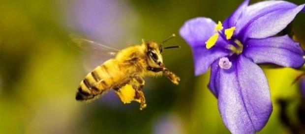 La desaparición de las abejas conllevaría una crisis alimentaria y económica sin presentes a nivel mundial