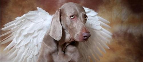 O que algumas religiões dizem sobre o destino dos animais após a morte? (Foto: Reprodução)
