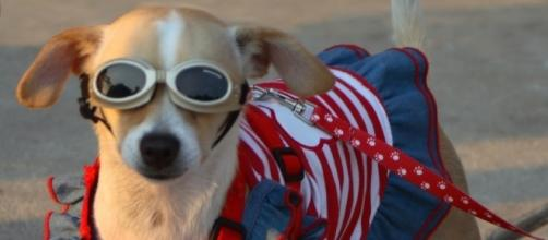 Are your pets ready for the Fourth of July? [Image via Flickr]