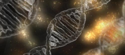 Evolucionismo é ciência? (Foto: Reprodução)