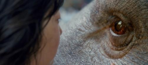Okja è disponibile su Netflix dal 28 giugno