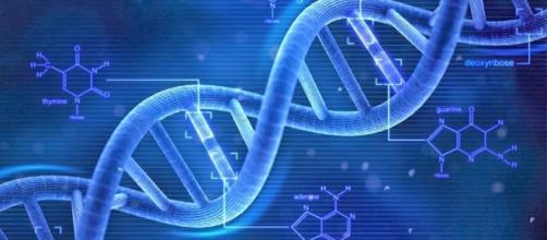 Il microchimerismo proviene dal Dna maschile che va a finire nel cervello femminile.