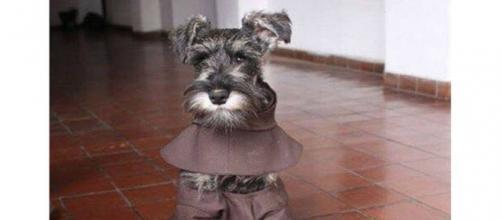 Fray Bigotón, el perro religioso - com.ec